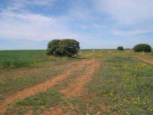 Vista de la Cañada Real Burgalesa